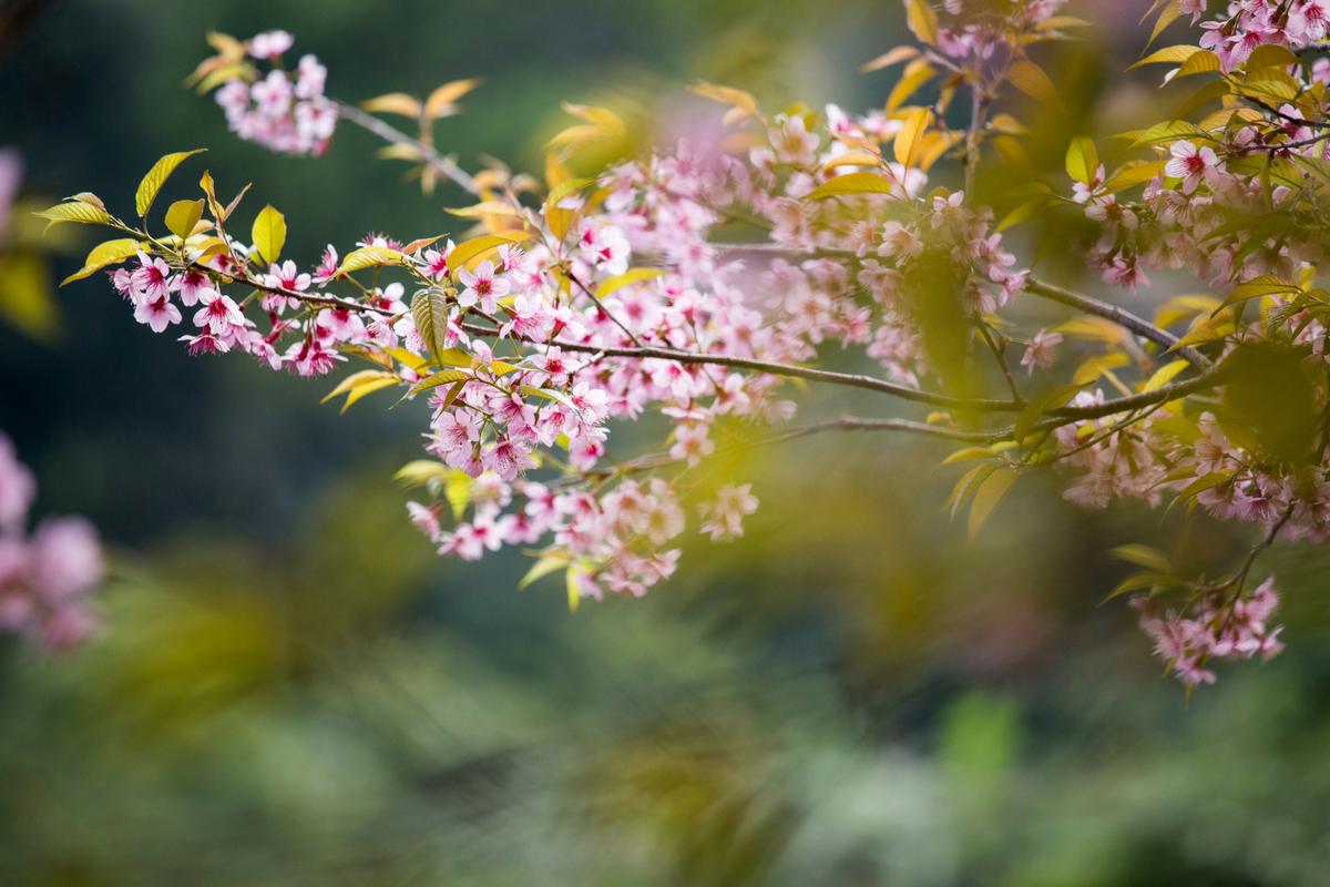 Blossoms - TRE Intro