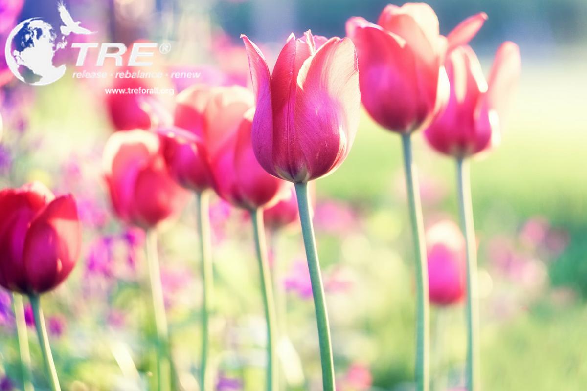 Pink Tulips - TRE Provider Workshops