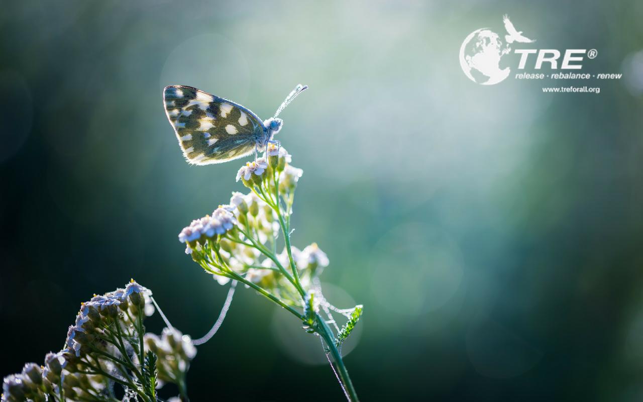 Butterfly - TRE Open Classes